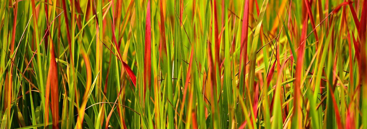 kolory natury